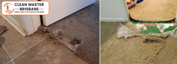 Carpet Pet Damage Repair Service Lamb Island