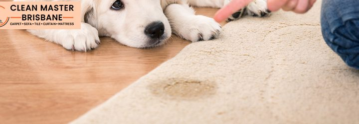 Tips To Preserve The Carpet From Pets Urine