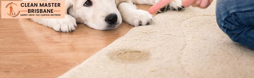 Carpet Urine Stain Removal