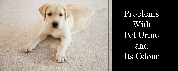 Problems With Pet Urine and Its Odour